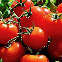 Tomates Grappes - 500 g