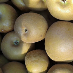 Pomme Canada - 500 g
